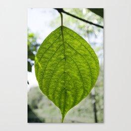 Leaf Green Canvas Print