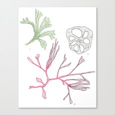 Seaweed and Lotus Root Canvas Print