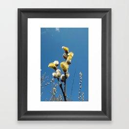 Weidenkätzchen Framed Art Print