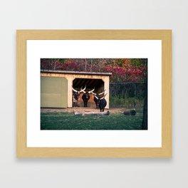 Bulls Art Print Framed Art Print