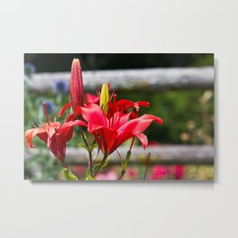 Red Lilies Metal Print