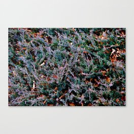 Lost in the Frenzy Canvas Print