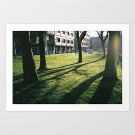 Tree shadows Art Print