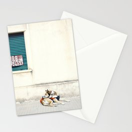 Street dog in Uruguay Stationery Cards