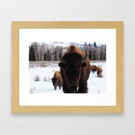 Little Bison Framed Art Print