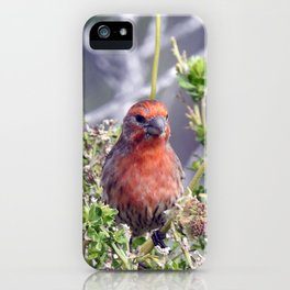 Handsome Male House Finch iPhone Case
