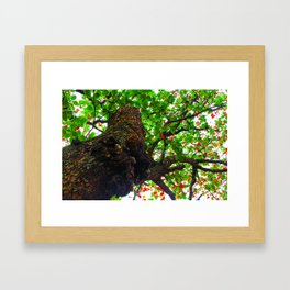 big tree with green leaves and red leaves Framed Art Print