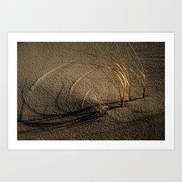 Grass Shadows Art Print