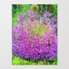 Dewey Allium Canvas Print