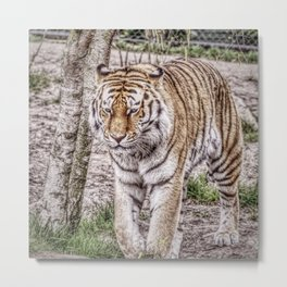 Painted Tiger 31801 Metal Print