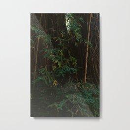 Redwood Forest III Metal Print