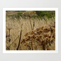 Navaro Bluffs, fall flowers III Art Print