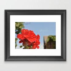 red flowers in my garden Framed Art Print