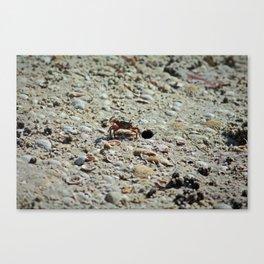 Fiddler Crab Canvas Print