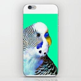 Blue Boy Budgie Bird iPhone Skin