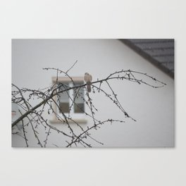 bird in the rain Canvas Print
