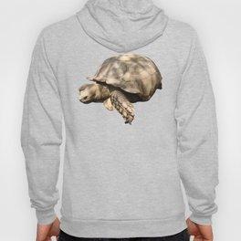 Sulcata Tortoise (grazing) Hoody