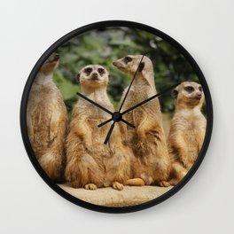 Meerkat_2015_0122 Wall Clock