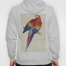 Vintage Illustration of a Macaw Parrot (1832) Hoody