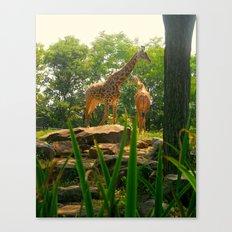 Giraffing Around  Canvas Print