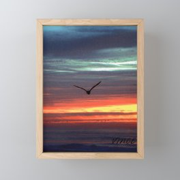 Black Gull by nite Framed Mini Art Print