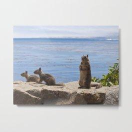 Three Squirrels on the Coast Metal Print