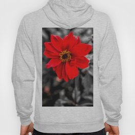 Red and Yellow Hoody