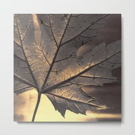 canadian maple leaf - square Metal Print