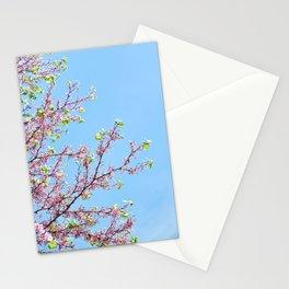 Blossoming Cercis siliquastrum or Judas tree Stationery Cards
