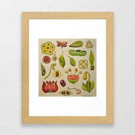 botany Framed Art Print
