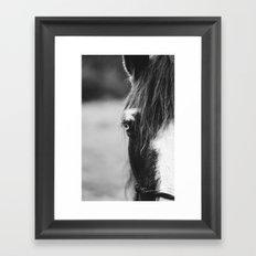 Blue Eye - horse photography Framed Art Print