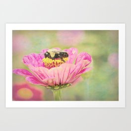 Honey Bee on Dahlia 1 Art Print