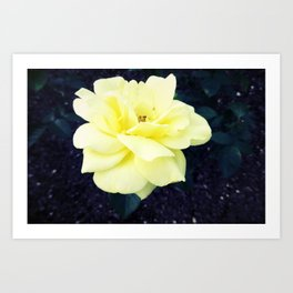 Friendship's Rose Art Print