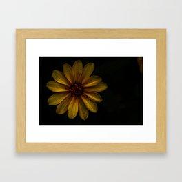 Rustic Sunflower Framed Art Print