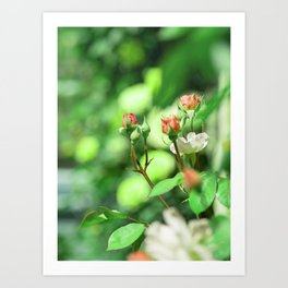 Princess garden Art Print