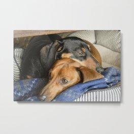Pooped Pups Metal Print