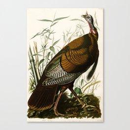Wild Turkey, Birds of America by John James Audubon Canvas Print
