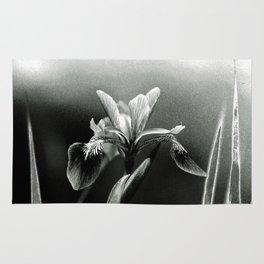 Beautiful Blue Flag Iris in black and white Rug