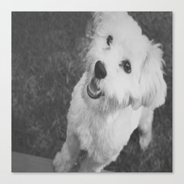 A Puppy Saying Hello Light Black and White Canvas Print