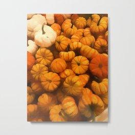 Pumpkins Tiny Gourds Pile Metal Print