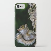 squirrel iPhone & iPod Cases featuring Squirrel by Fine Art by Rina