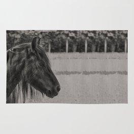 Black Horse Rug