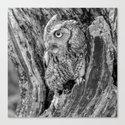Echo the Screech Owl by Teresa Thompson by teresathompson