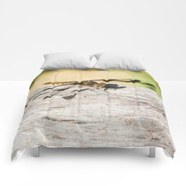 Hello Dragonfly Comforters