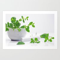 melissa smith Art Prints featuring Melissa officinalis by Tanja Riedel