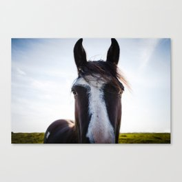 Horse photo, horse in field close up Canvas Print
