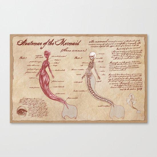 Anatomy of the Mermaid Canvas Print
