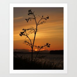 Alone with beauty Art Print
