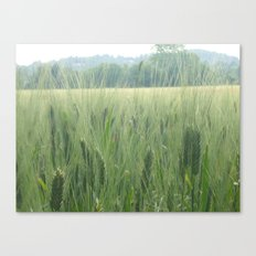 Spring wheat Canvas Print