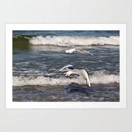 PERFECT HARMONY - Seagulls - Island Ruegen  Art Print